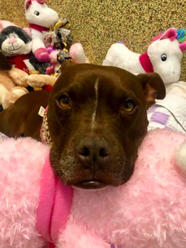 dog attack attorneys,dog bite injury lawyer
