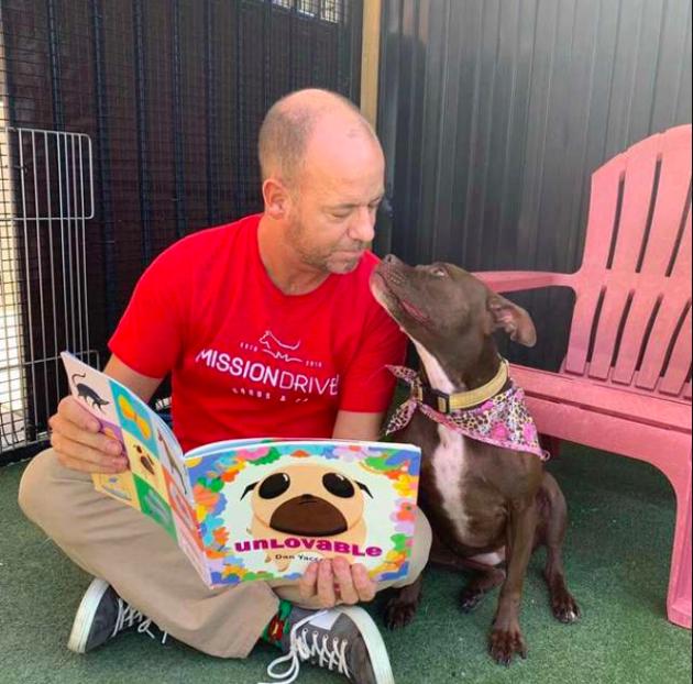 lawyers for dog bites dog injury lawyers