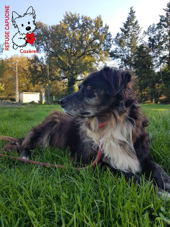 dog bite lawsuit no insurance  dog bite lawsuit mesothelioma trial attorney mesothelioma lawyer