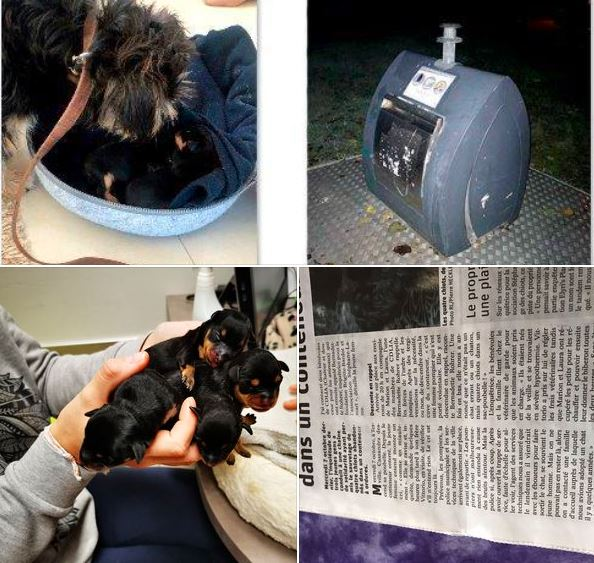 He Throws 4 Puppies In A Container What The Volunteers Discover At His Home Is Shivering Wobyhealth