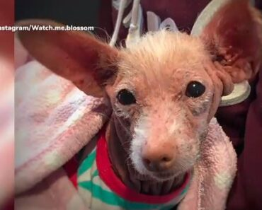 dog bite lawsuit no insurance dog bite lawsuit mesothelioma trial attorney mesothelioma lawyer 18 wheeler accident lawyer truck wreck lawyer mesothelioma attorney best mesothelioma lawyers mesothelioma law firm sokolove bethune law firm mesothelioma attorney