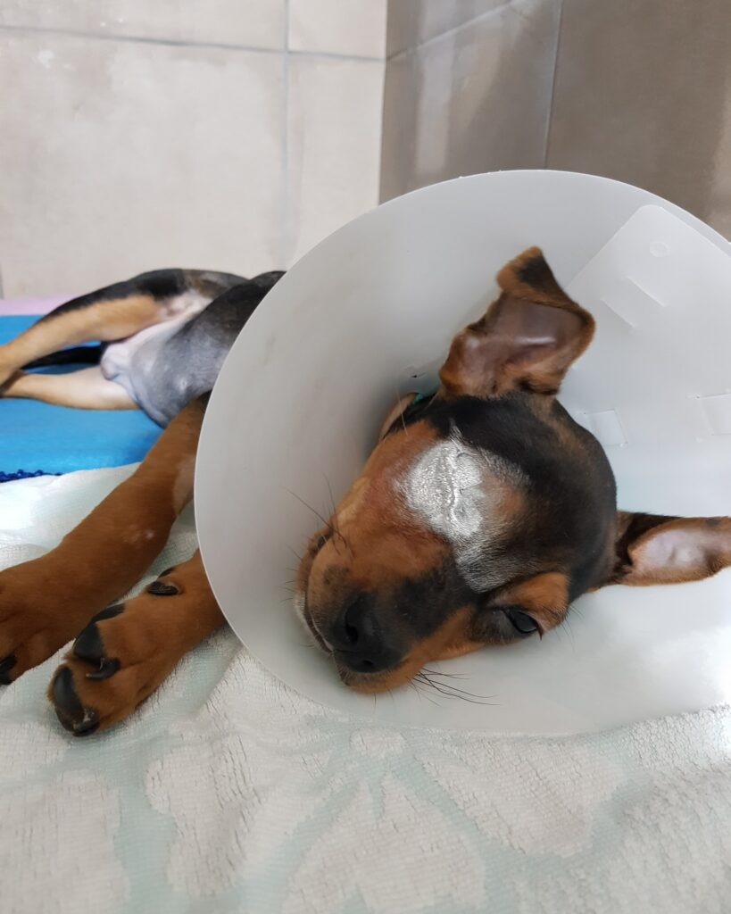 dog bite lawsuit no insurancedog bite lawsuit mesothelioma trial attorney mesothelioma lawyer 18 wheeler accident lawyer truck wreck lawyer mesothelioma attorney best mesothelioma lawyers mesothelioma law firm sokolove bethune law firm mesothelioma attorney